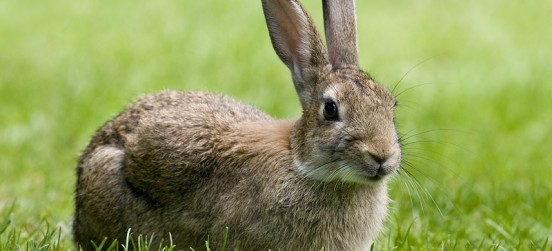 """Why Hazel from """"Watership Down"""" is such a brilliant leader"""
